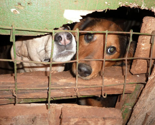 Dogs like people do not like to be confined, it makes them behave badly